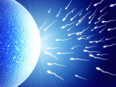 Óvulo e espermatozóides